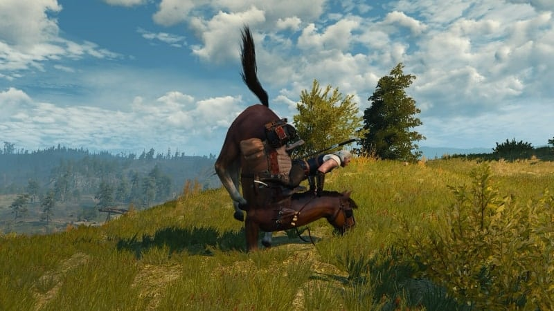 roach horse witcher quiz